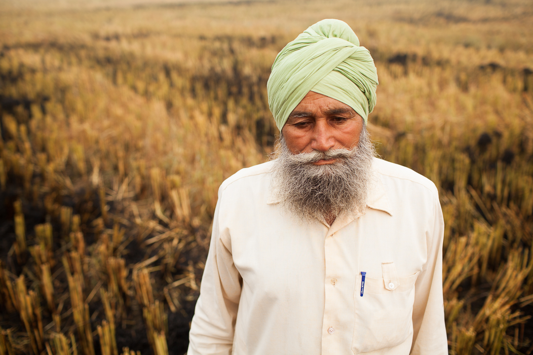 Images shows a Sikh Panjabi farmer looking down in the middle of a field. He is wearing a green dastaar (Sikh turban) and white shirt with a pen in his left pocket.