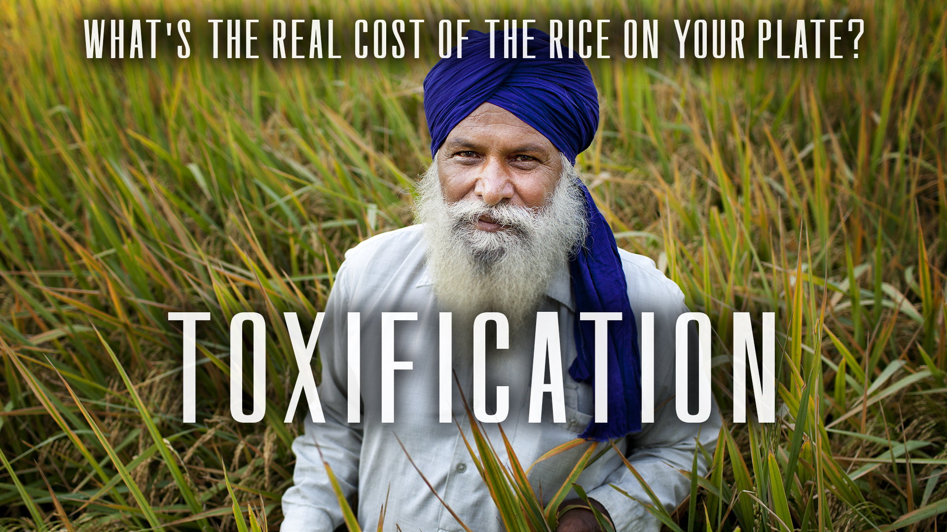 Image shows a Panjabi farmer in a field. Text reads: What is the real cost of the rice on your plate? Toxification.